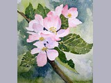 Fiona Robertson - Appleblossom - watercolour