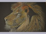 Martin Burnett - Lion - graphite pencil