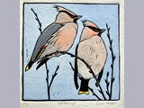 Lisa Hooper - Waxwings - hand-coloured linocut